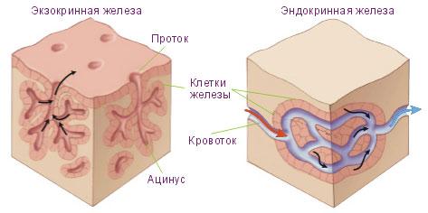 Озонотерапия при атопическом дерматите отзывы