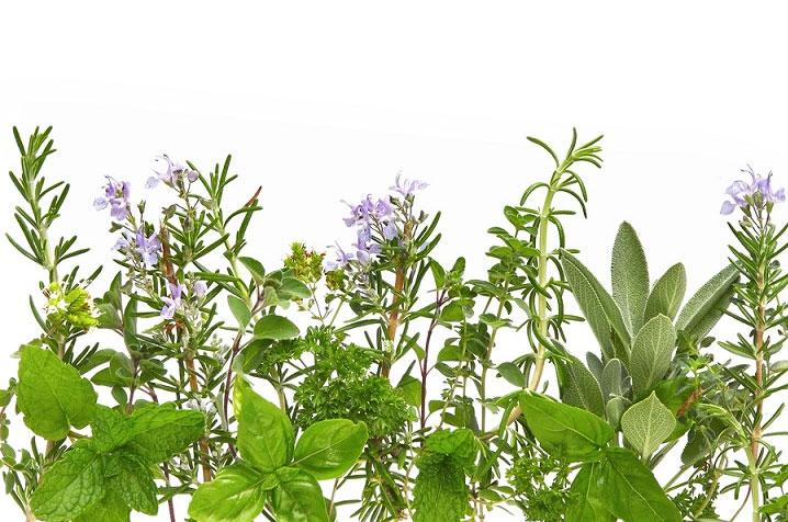 Аудио) Отзыв о лечении псориаза одной ядовитой травой